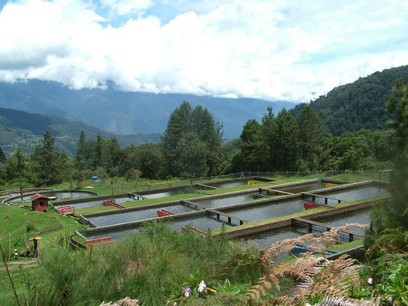 Forellenzucht ist eine der wichtigsten Wirtschaftsaktivitäten im Bundestaat Merida. In Venezuela gibt es nur fünf Forellenzuchtanlagen, vier von ihnen sind in Merida