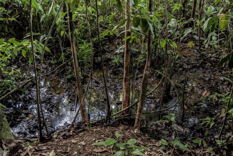 An vielen Stellen des  ecuadorianischen Amazonas tritt abgepumptes Rohöl wieder an die Oberfläche