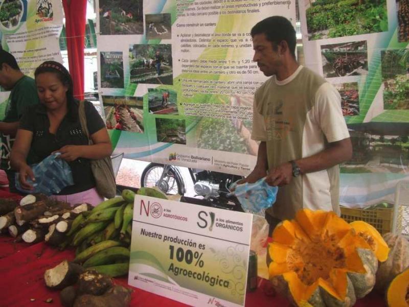 Kommunarden, die im Rahmen des Landwirtschaftsprogramms der Regierung AgroVenezuela in urbanen Gärten arbeiten