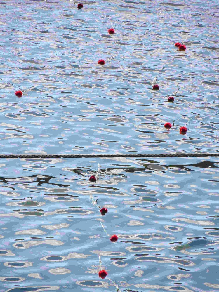 Angehörige warfen Blumen in den Fluss