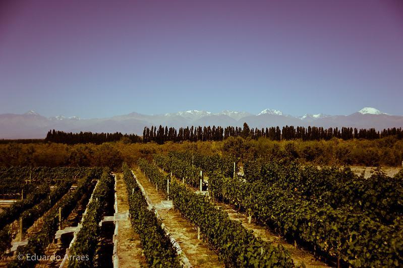 Der Weinbau ist das wichtigste Gut in der Provinz Mendoza am Rande der Anden. Aber nicht nur dessen Wasserversorgung wäre durch den Bergbau begünstigende Gesetze bedroht...