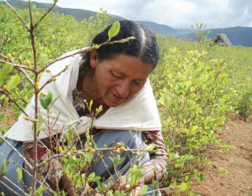 Kokabäuerin in Bolivien