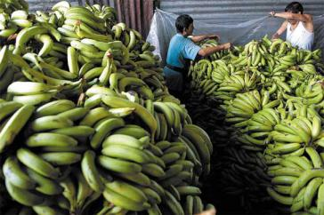 Arbeiter auf Bananenplantage bei Bandeco in Costa Rica