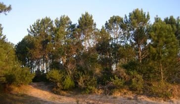 """Der natürliche Wald In Uruguay soll laut Gesetz als """"strategisches Element"""" für das ökologische Gleichgewicht geschützt werden"""
