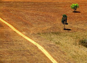 Aufgrund der starken Abholzung des Amazonas-Regenwalds nehmen in Südamerika schwere Dürren immer mehr zu