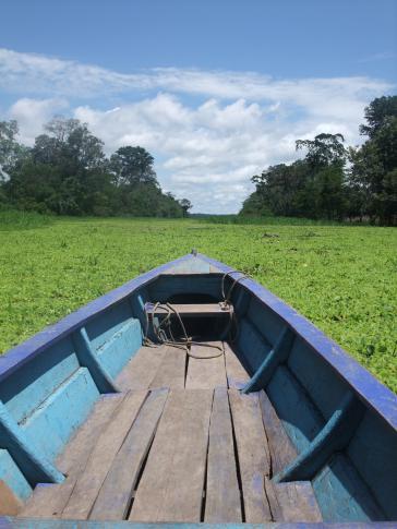 Die weltweit einzigartige Amazonasregion ist in Gefahr...