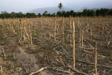Die Dürre in Mittelamerika bedroht die Ernährungssicherheit
