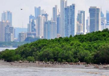 Stadtentwicklungsprojekte und chemische Verschmutzung bedrohen die Feuchtgebiete der Panama-Bucht