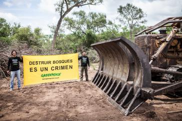 """""""Wälder zerstören ist ein Verbrechen"""": Greenpeace protestiert gegen die massive Abholzung in Argentinien"""