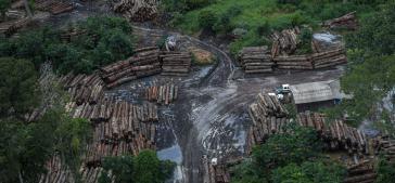 Die Abholzung des Amazonasgebiets nahm 2019 um 34,4 Prozent zu