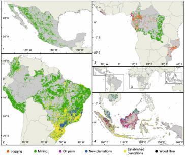 Die Abholzung von Regenwald schreitet, auch begünstigt von privatem Investment, immer weiter voran