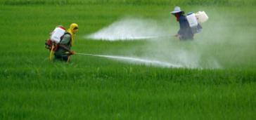 Ende 2019 lehnte Semarnat eine Zulassung des Imports von 1.000 Tonnen Glyphosat ab