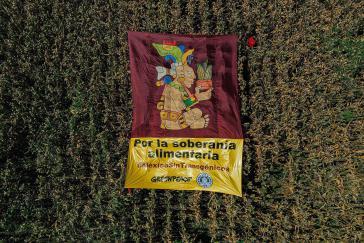 Greenpeace forderte wie andere Umweltorganisationen auch schon lange den Verbot von Genmais und den Einsatz von Glyphosat in Mexiko