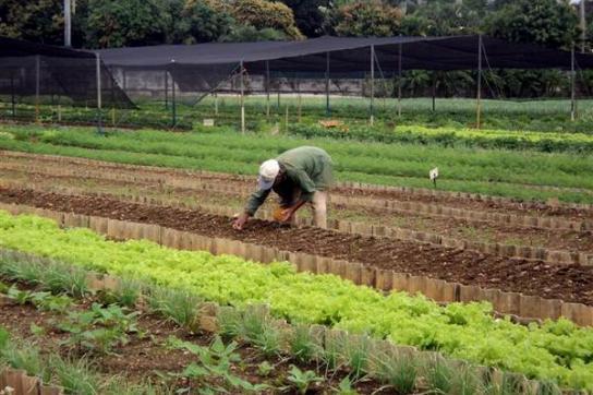 Beispielhaft: Ökologischer Landbau in Kuba