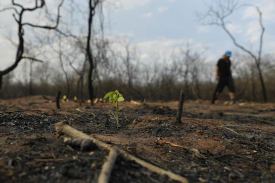 Ein Feuerwehrmann schreitet die verbrannte Erde ab, während im Vordergrund eine neue Pflanze wächst.